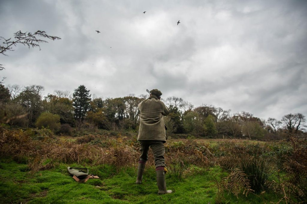 Pheasant shooting wales UK 6